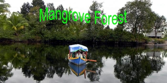 mangrove forest tour mit hans in koh kong.